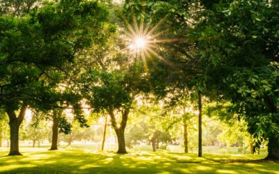 Best Ways to Get Outside Safely This Spring